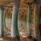 Odd Forest by Melanie Viola