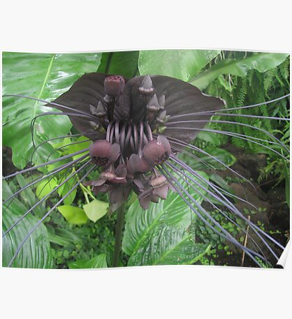 Bat Lily Poster