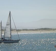 Sail Boats on the Bay by pjwilliams12