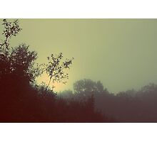 Bamboo Sunrise - Ardingly Photographic Print