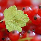 Red Currant II by vbk70