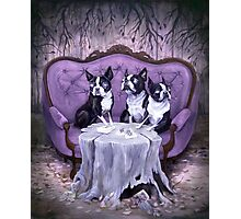 The Weird Litter Mates Photographic Print