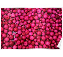 Australian Lilly Pilly Berries Poster
