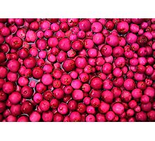 Australian Lilly Pilly Berries Photographic Print