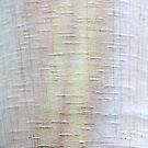 white impressions by yvesrossetti