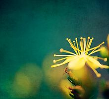 Flower by Michaela Rother