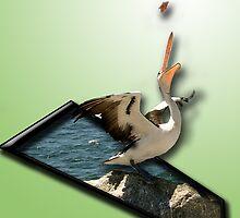 Pelican #4 by Elisabeth Dubois