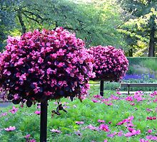 Garden of Flowers & Trees by dawnandchris