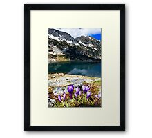 wild violet flower on the mountain Framed Print