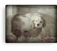 Sleeping In My Toy Box Canvas Print