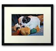 Plush Toys Framed Print