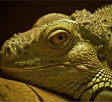 Lizard by Peter Towle