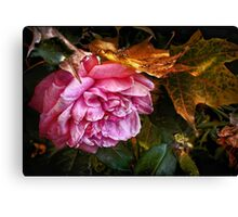 October Rose Canvas Print