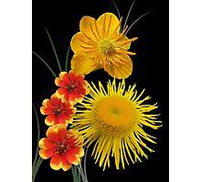 Golden colours Photographic Print
