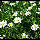 Daisy's at Baxter's Park by markw123