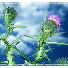Thistle's up close  by markw123