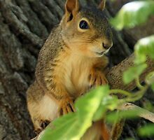 Squirrel posing on a branch by agenttomcat