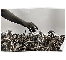 Streicheln der Weizen Poster