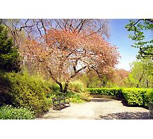 Conservatory Gardens, Central Park Photographic Print