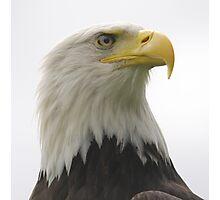 Bald head Eagle Photographic Print