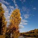 Almost Fall-ing - Interior Alaska by Melissa Seaback