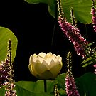 Lotus and Loosestrife by jimHphoto