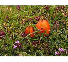 Easter Egg Fungus Photographic Print