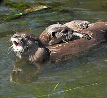 Playful Otters by Toots2