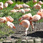 Colourful Flamingos by Toots2