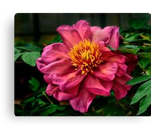 A Red Flower For Love Canvas Print