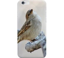 House sparrow poses for the camera iPhone Case/Skin