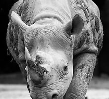 Rhino by Gilmorte