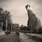 Inquisitive seagull by Esther  Moliné