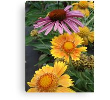 Coneflower and Indian Blankets Canvas Print