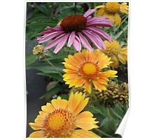 Coneflower and Indian Blankets Poster