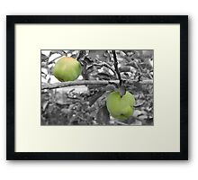 My green apples... Framed Print