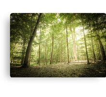 Lighted Grove Canvas Print