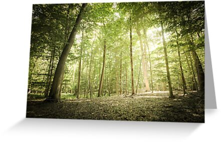 Lighted Grove by M.Reder Photography