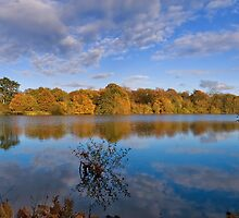 Hatfield Forest Lake by Nigel Bangert