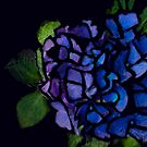 Hydrangea No. 23 by Sarah Butcher