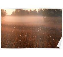 Foggy Stony Creek Park Poster