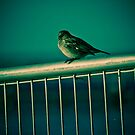 Fence sitter by kat86