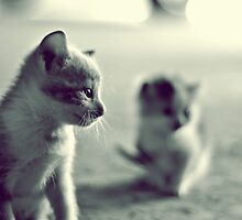 Little Kitties by James Elliott