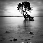 Mangrove by Christine Wilson