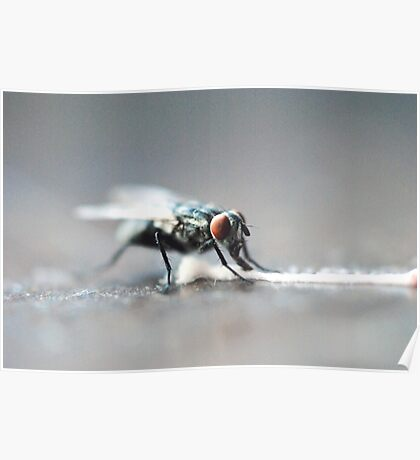 Fly Feasting Poster
