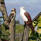 Kookaburra by Eeva47