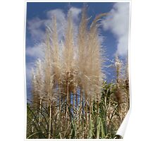 Feathery Grasses Poster