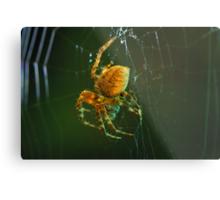 Orb-weaver spider Metal Print