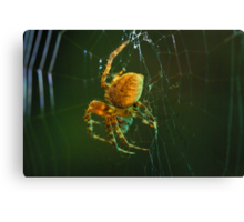 Orb-weaver spider Canvas Print