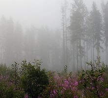 Forest in mist with wild flowers by Antanas